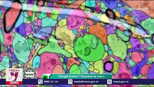 Bản đồ 3D chi tiết nhất về não người