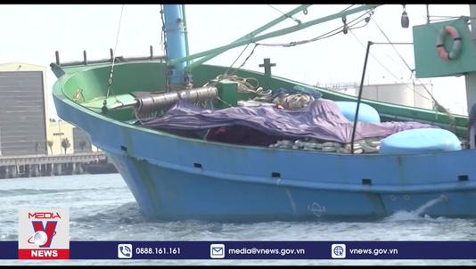 Nghiệp đoàn nghề cá Quảng Nam miệt mài vươn khơi giữa thời dịch
