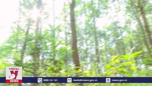 Doanh nghiệp bỏ rơi người trồng rừng
